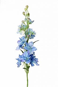 Delphinium 60 cm albastru