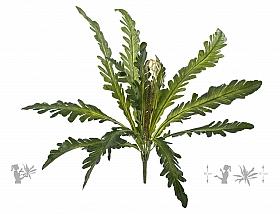 Feriga artificiala Asplenium nidus S