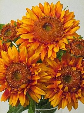 Floarea Soarelui D15x10xH66 cm HOB galben