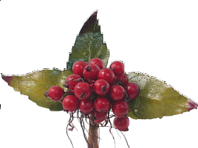 Fructe de padure HO rosu 92981