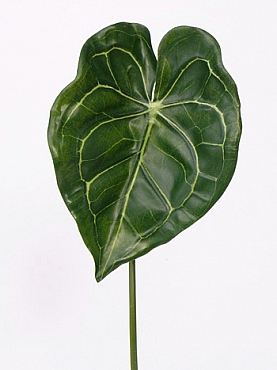 Frunza Anthurium 67 cm