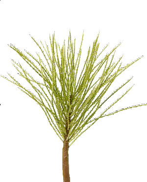 Frunza de Palmier maxi 77 cm