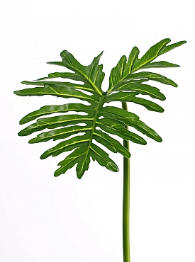 Frunza de Philodendron D40xH90 cm