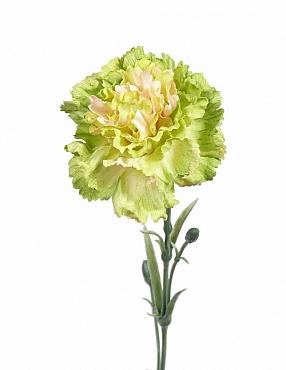 Garoafa D9xH60 cm verde Carnation
