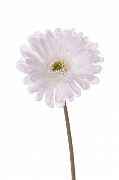 Gerbera 48 cm alb