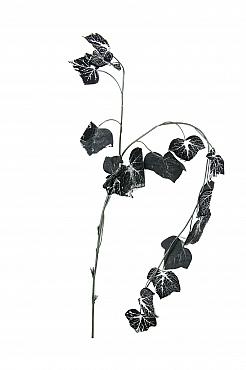 Ghirlanda cu frunze de iedera 160 cm Hedera