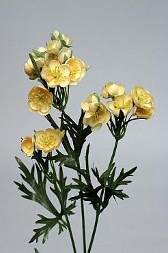 Helleborus 72 cm HO galben Christmas rose