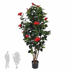 Hibiscus Chinese 180 cm 79387