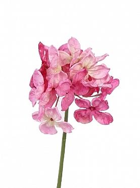 Hortensia 30 cm roz