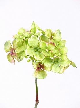 Hortensia 30 cm verde