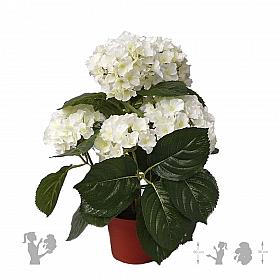 Hortensia 36 cm 87111 Hydrangea