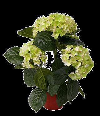 Hortensia 36 cm 87114 Hydrangea