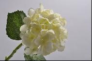 Hortensia 38 cm crem DE