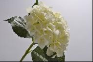 Hortensia 56 cm alb DE