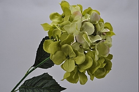 Hortensia 74 cm verde DE