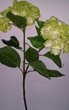 Hortensia 75 cm verde