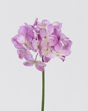 Hortensia D10xH30 cm violet