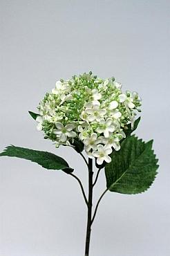 Hortensia D10xH50 cm HO alb