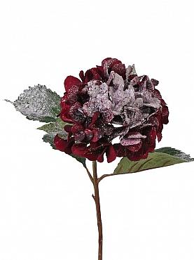 Hortensia D15xH70 cm burgundy