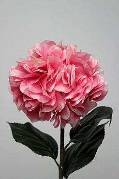 Hortensia D20xH65 cm HO roz