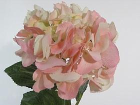 Hortensia HO roz