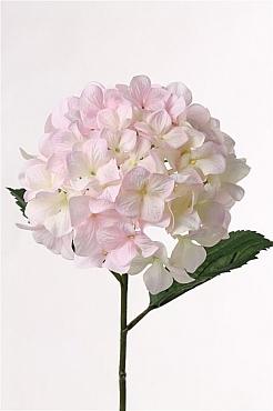 Hortensia Imperial D20xH68 cm roz