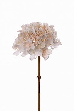 Hortensia Retro Romance 50 cm alb