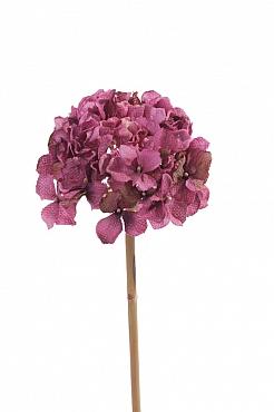 Hortensia Retro Romance 50 cm fuchsia