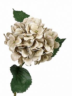 Hortensia Vintange D20xH68 cm gri