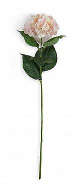Hortensie D12xH70 cm roz