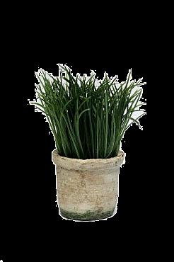 Iarba 15 cm HO Grass