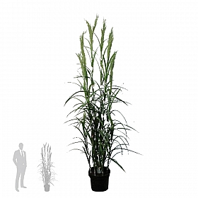 Iarba 180 cm HO Grass