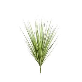 Iarba Carex variegata 40 cm Grass