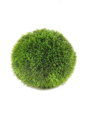 Iarba D23 cm Grass plant