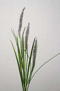 Iarba inflorita 60 cm HO Grass flowering