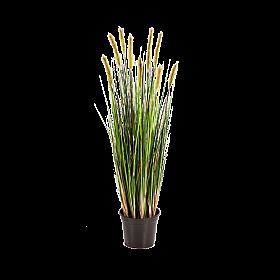 Iarba inflorita 90 cm Grass flowering