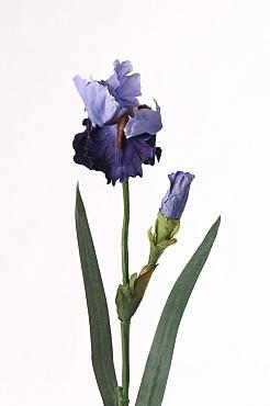Iris H71 cm albastru
