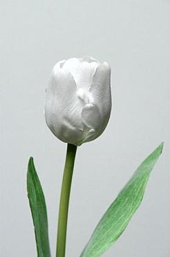 Lalea D6x6xH48 cm HO alb