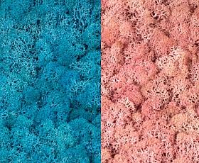 Licheni curatati si fara radacina 500g, 2 culori albastru azur cu roz deschis