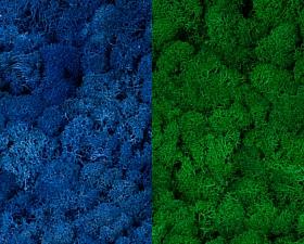 Licheni curatati si fara radacina 500g, 2 culori albastru clasic deschis cu verde smarald deschis