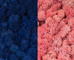 Licheni curatati si fara radacina 500g, 2 culori albastru clasic inchis cu roz