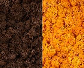 Licheni curatati si fara radacina 500g, 2 culori maro cu galben intens