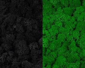 Licheni curatati si fara radacina 500g, 2 culori negru cu verde intens