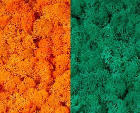 Licheni curatati si fara radacina 500g, 2 culori portocaliu cu verde pacific
