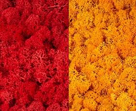 Licheni curatati si fara radacina 500g, 2 culori rosu intens cu galben intens