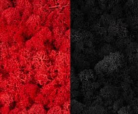 Licheni curatati si fara radacina 500g, 2 culori rosu intens cu negru