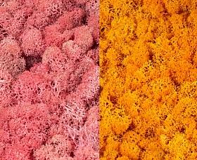 Licheni curatati si fara radacina 500g, 2 culori roz cu galben intens