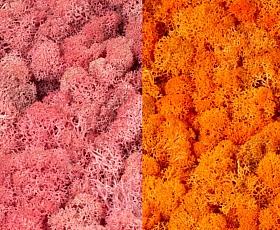 Licheni curatati si fara radacina 500g, 2 culori roz cu portocaliu