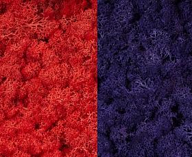 Licheni curatati si fara radacina 500g, 2 culori roz cyclamen cu mov purpuriu