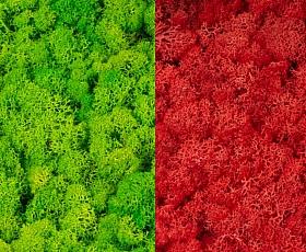 Licheni curatati si fara radacina 500g, 2 culori verde deschis cu roz cyclamen